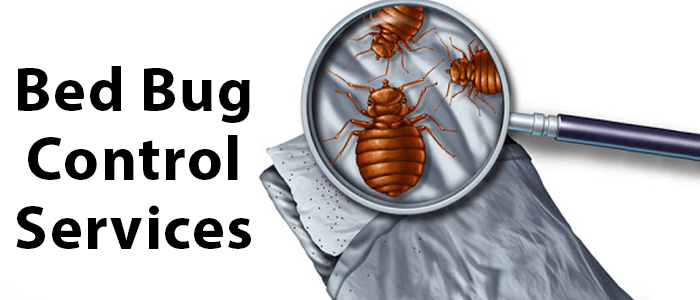 Bed Bug Control Belair